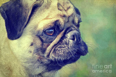 Mixed Media - Pug by Angela Doelling AD DESIGN Photo and PhotoArt