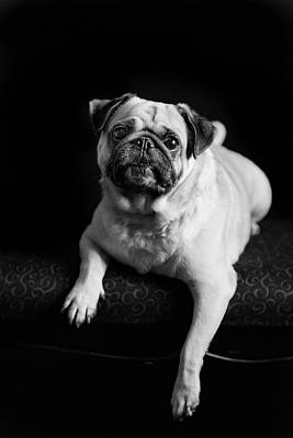 Photograph - Pug Cute by Tammy Ray