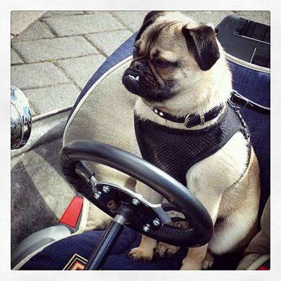 Steampunk Wall Art - Photograph - #pug #dog #driver #steampunk #car by Pamela Harridine
