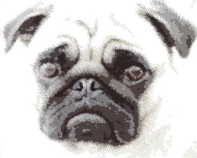 Drawing - Pug Dog -  Parallel Hatching by Samuel Majcen