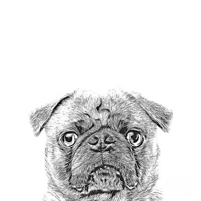 Puppy Digital Art - Pug Dog Sketch by Edward Fielding