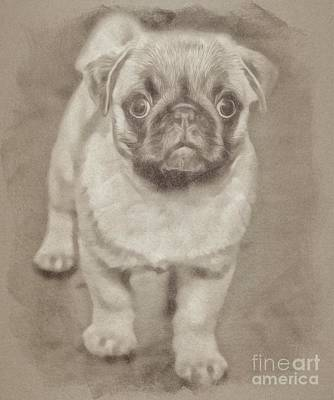 Animals Drawings - Pug by Esoterica Art Agency
