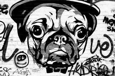 Photograph - Pug Life by John Rizzuto