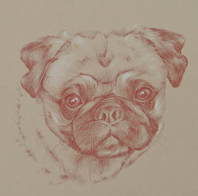 Drawing - Pug Square by Wendy Booth