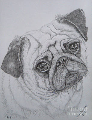 Scottish Dog Drawing - Pug by Yvonne Johnstone