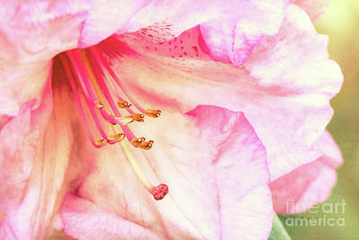 Photograph - Puget Sound Rhododendron by Jean OKeeffe Macro Abundance Art