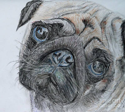 Drawing - Puggie by Lyric Lucas