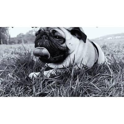 #pugstagram #pugsofinstagram #puglife Art Print by Natalie Anne