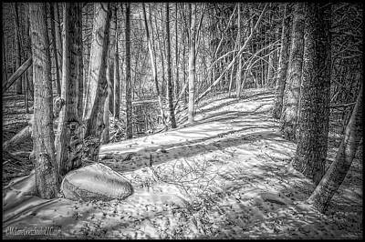 Pathways Photograph - Pulled Into The Woods Black And White 2 by LeeAnn McLaneGoetz McLaneGoetzStudioLLCcom