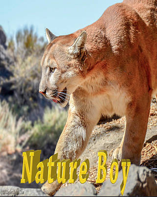 Photograph - Puma Mountain Lion Nature Boy by LeeAnn McLaneGoetz McLaneGoetzStudioLLCcom