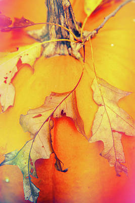 Photograph - Pumpkin And Leaves by Karol Livote