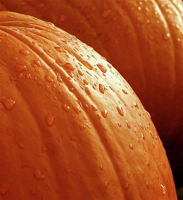 Dew Photograph - Pumpkin Dew by Greg Joens
