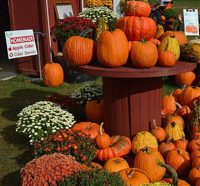 Photograph - Pumpkin Display by Charles HALL