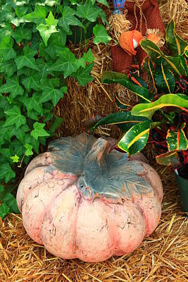 Photograph - Pumpkin Display by Jill Lang