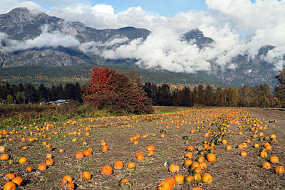 Photograph - Pumpkin Field At North Arm Farm Pemberton by Pierre Leclerc Photography