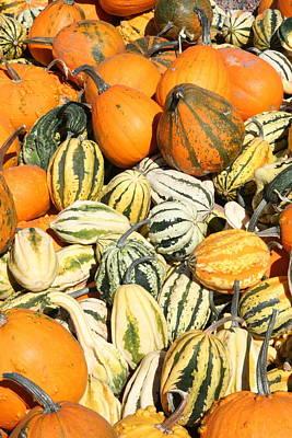 Pumkpin Photograph - Pumpkin Field by Patt Nicol