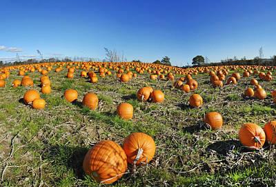 Pumpkin Fields Photograph - Pumpkin Field by Robert Lacy