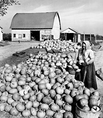 Barnyard Photograph - Pumpkin Harvest by American School
