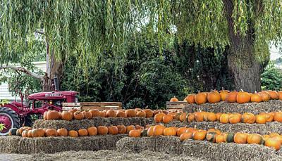Pumpkin Harvest. Art Print by Angela Aird