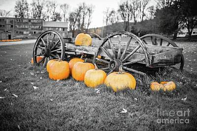 Photograph - Pumpkin Harvest Stowe Vermont by Edward Fielding