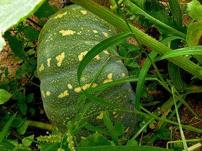 Leaf Photograph - Pumpkin In The Field 1 by Lanjee Chee