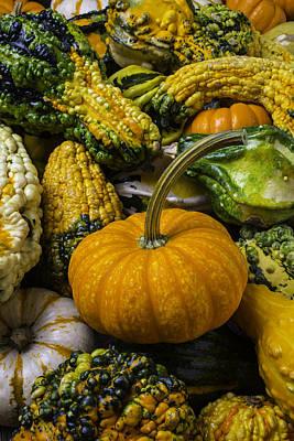 Pumpkin In The Gourds Art Print