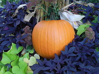 Photograph - Pumpkin by John Parry