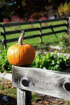 Photograph - Pumpkin On Fence, Freeport, Maine  -300064 by John Bald