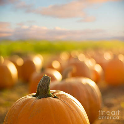 Pumpkin Patch Art Print by Alissa Beth Photography