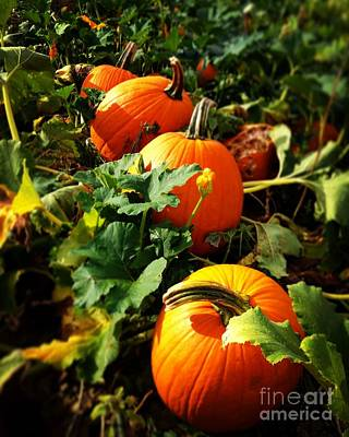 Photograph - Pumpkin Patch by Angela Rath