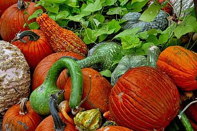 Photograph - Pumpkin Patch by Diana Mary Sharpton