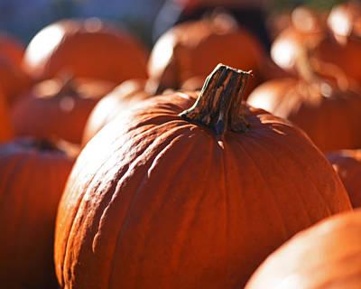 Photograph - Pumpkin Patch Farm by Toby McGuire