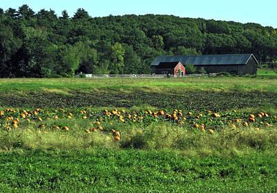 Photograph - Pumpkin Patch by GJ Blackman