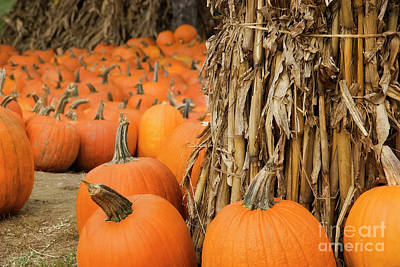 Photograph - Pumpkin Patch by Jill Lang