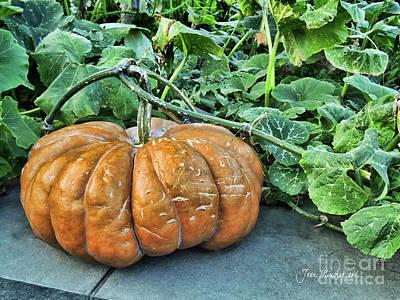 Pumpkin Patch Art Print by Joan Minchak