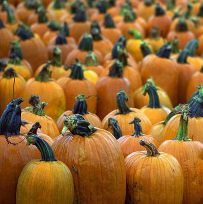 Photograph - Pumpkin Patch by Joseph Skompski