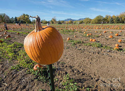 Pumpkin Patch Photograph - Pumpkin Patch by Juli Scalzi