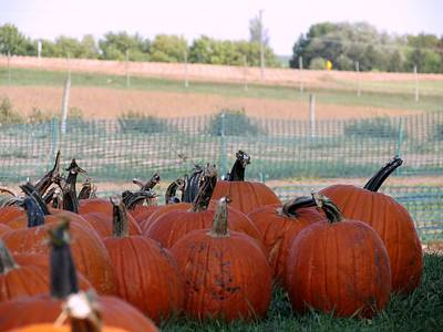Photograph - Pumpkin Patch by Kyle West