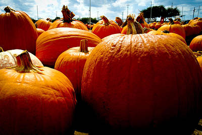 Photograph - Pumpkin Patch Piles by Marisela Mungia