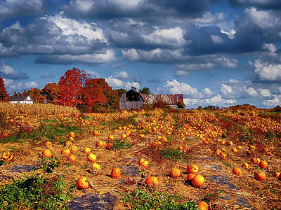 Photograph - Pumpkin Patch by Ron Grafe