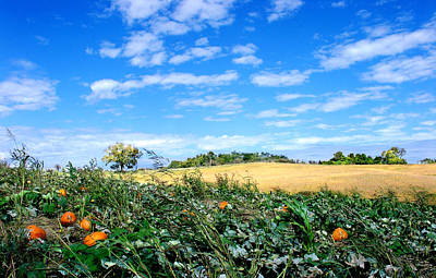 Photograph - Pumpkin Patch by Steve Karol