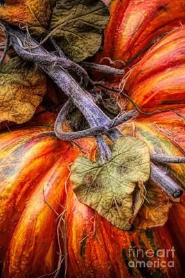 Photograph - Pumpkin by Paulette Thomas