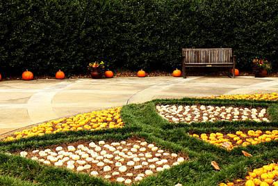 Photograph - Pumpkin Perch by Judy Vincent