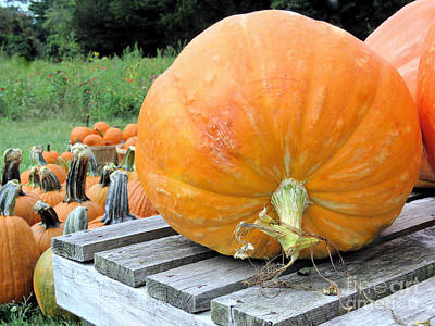 Photograph - Pumpkin Picking by Janice Drew
