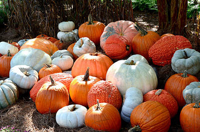 Ally Photograph - Pumpkin Pile by Ally  White