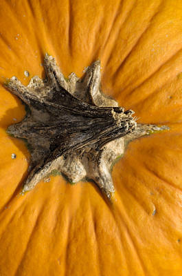 Photograph - Pumpkin Point by Christi Kraft