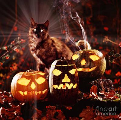 Photograph - Pumpkin Puss by Warren Photographic