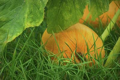 Photograph - Pumpkin - Ready For Harvest by Nikolyn McDonald