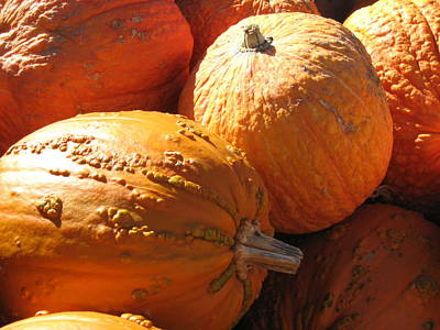Photograph - Pumpkin Shadows by Cindy Plutnicki