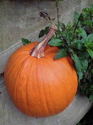 Photograph - Pumpkin by Terri Harper